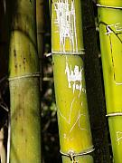 Stalk Originals - Bamboo Grafitti by Florene Welebny