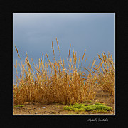 Dried Reeds Posters - Bamboo in the sunset Poster by Manolis Tsantakis