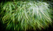 Multiple Exposures Posters - Bamboo in the wind Poster by Gary Eason