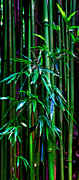 Bamboo Photo Posters - Bamboo Poster by James Roemmling
