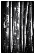 Fall Photos Framed Prints - Bamboo Framed Print by John Rizzuto