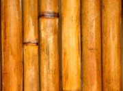 Bamboo Fence Photo Posters - Bamboo Poles Poster by Yali Shi