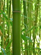 Bamboo Metal Prints - Bamboo Metal Print by Rhianna Wurman