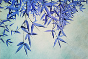 Shrub Metal Prints - Bamboo Susurration Metal Print by Priska Wettstein