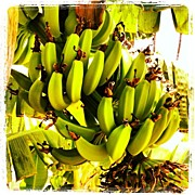 Food And Beverage Art - Banana Tree by Darice Machel McGuire