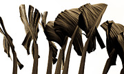 Banana Art Photo Posters - Banana Tree Leafs Poster by Atom Crawford