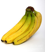 Fruits Photos - Bananas by Photo Researchers, Inc.