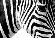 Abstract Animal Prints - Banding Print by Andrew Paranavitana