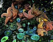Tidal Pool Photos - Bandon Beach Oregon Pacific Tidal Pool by Ed  Riche