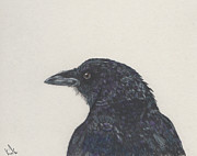 Barb Kirpluk - Bandy the Crow