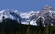 Snowbird Prints - Banff - Mt. Patterson 2 Print by Terry Elniski