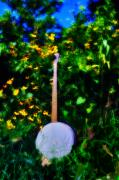 Bluegrass Posters - Banjo in the Weeds - Backwoods Music Poster by Bill Cannon