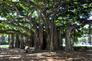 Banyan Prints - Banyan Tree Print by Andrew Dinh
