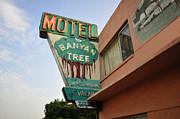 Motel Art Prints - Banyan Tree Motel Print by David Lee Thompson