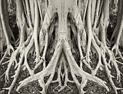 Banyan Tree Posters - Banyan Tree X2 Poster by Patrick M Lynch