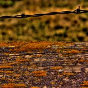 Barbed Wire Fence Framed Prints - Barbed Fence Framed Print by David Patterson