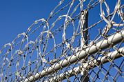 Barbed Wire And Chain Link Fence Print by Paul Edmondson