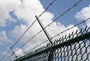 Chain Fence Posters - Barbed wire Poster by Blink Images