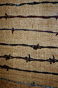 Barbed Wire Fences Framed Prints - Barbed Wire Fencing Framed Print by LeeAnn McLaneGoetz McLaneGoetzStudioLLCcom
