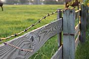 Barbed Wire Fence Framed Prints - Barbed Wire Framed Print by Lauri Novak