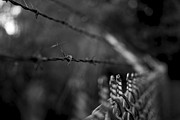 Barb Framed Prints - Barbed Wire Framed Print by Mike Horvath
