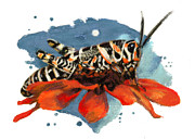 Insects Pastels - Barber Pole Grasshopper by Janice Lawrence