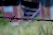 Old Farm Shed Originals - Barbwire by Jason Blalock