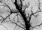 Bare Trees Prints - Bare Branches Print by John Gilroy