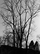 Bare Trees Prints - Bare Limbs Print by Vijay Sharon Govender