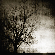 Spooky Scene Prints - Bare Tree at Sunset 2 Print by Skip Nall