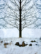 Snow Scene Framed Prints - Bare Tree in Winter Framed Print by Jill Battaglia