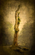 Picturesque Digital Art Posters - Bare Tree Poster by Svetlana Sewell