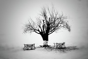 Single Tree Framed Prints - Bare Tree Framed Print by YongJun Qin