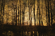 Brown Toned Art Metal Prints - Bare Trees 3 Metal Print by Skip Nall