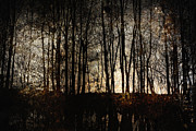 Mysterious Photos - Bare Trees by Skip Nall