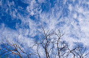 Julia Hiebaum - Bare Winter Branches in...