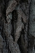 Abstracted Photos - Bark by Odd Jeppesen