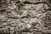 Natural Resources Prints - Bark On A Tree Print by John Short