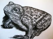 Hong Kong Drawings Prints - Barking Frog from Guangzhou Print by Joy Neasley