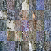 Tree Bark Photos - Barkitecture by Steve Gadomski