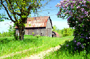 Cheryl Cencich Art - Barn and Lilacs by Cheryl Cencich
