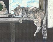 Barn Drawing Drawings - Barn Cat by Jennifer Uher