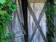 Barn Door Photo Framed Prints - Barn Door Vines Framed Print by Michael L Kimble