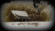 Barn In The Field Print by Travis Truelove