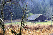 Quilcene Washington Framed Prints - Barn near the Dosewallips River Framed Print by Marie Jamieson