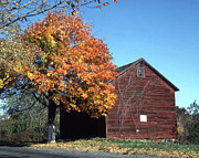 Barn Of Cornelius A Quackenbush Print by Donald Gaudiomnte