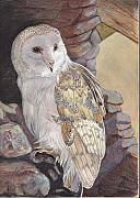 Callie Smith - Barn Owl