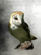 Barn Owls Prints - Barn Owl Print by Crispin  Delgado