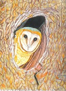 North American Wildlife Drawings Posters - Barn Owl Poster by Don  Gallacher