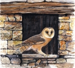 Owl Paintings - Barn Owl in an old Crete barn by Dag Peterson
